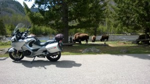 Beemer and Bison